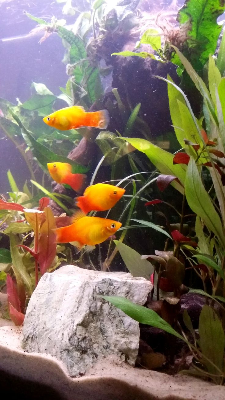 231 best images about poissons exotiques on pinterest for Spring water for fish tank