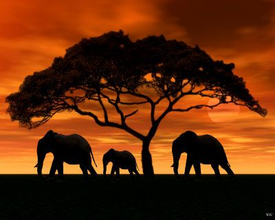 Elephants under a acacia tree at sunset.