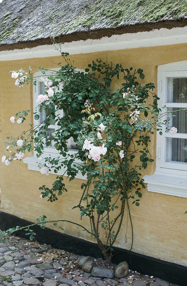 romantic roses at bakkehuset, aeroe, denmark. photo by camilla jorvad