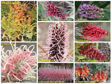 A beautiful collage from Warrawee Gardens.