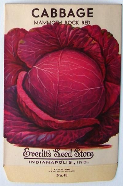 EVERITT'S SEED STORE,  Cabbage 45, Vintage Seed Packet                                                                                                                                                     More