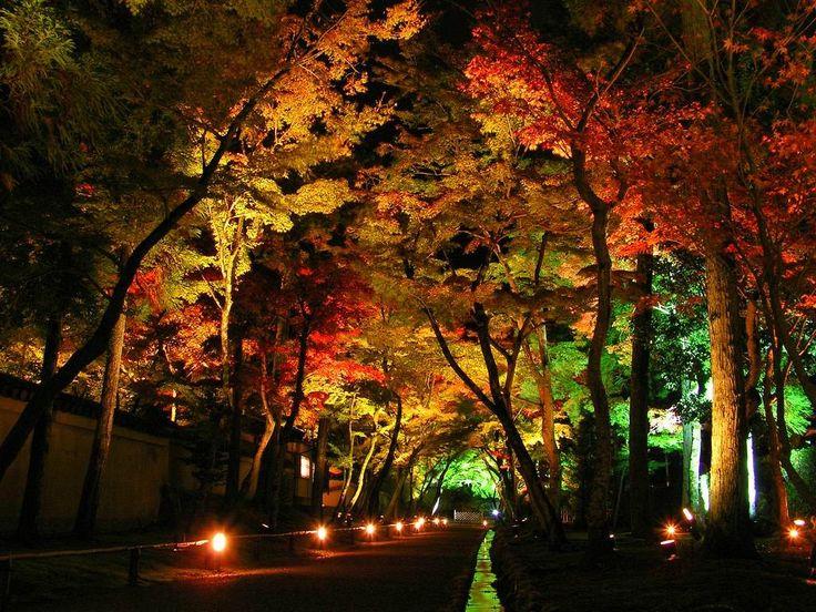 outdoor accent lighting ideas. landscape lighting design ideas u2014 home landscapings tree lightingaccent lightingoutdoor outdoor accent