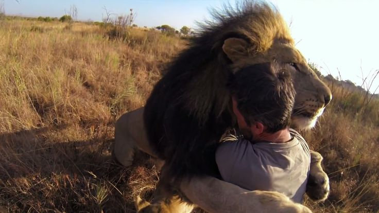 Man Tries to Hug a Wild Lion, You Won't Believe What Happens Next! This is magical...take a pause in your day and treat yourself to something beautiful & profound!