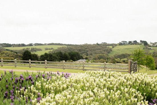 Claire and Jeremy's Rustic Lavender Farm Wedding