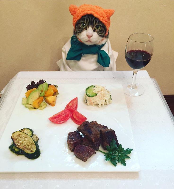 Today's dinner #cat#cats#catstagram#catsofinstagram #instacat_meows#instacat_models#picneko#ねこ#ネコ#猫#ニャンスタグラム#にゃんこ #みんなのねこ部#chef#シェフ#ねこひつじちゃん#サイコロステーキ#おからのサラダ#トマト#ズッキーニのチーズソテー#柿とアボカドのクミンドレッシング和え#mannishboys #斉藤和義#zip写真部