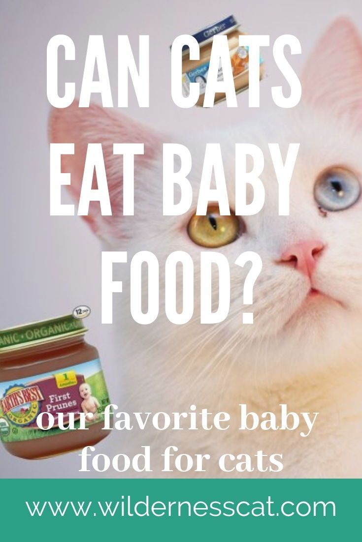 Can Cats Eat Baby Food Best Baby Food For Cats Wildernesscat Baby Food Recipes Senior Cat Food Gerber Baby Food