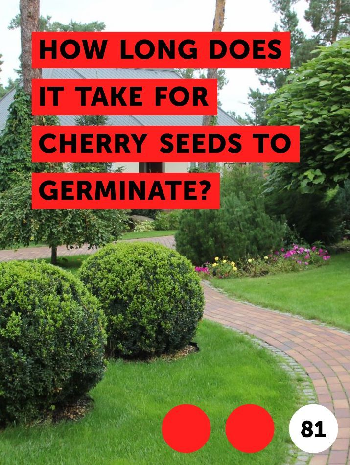 Learn How Long Does It Take for Cherry Seeds to Germinate ...