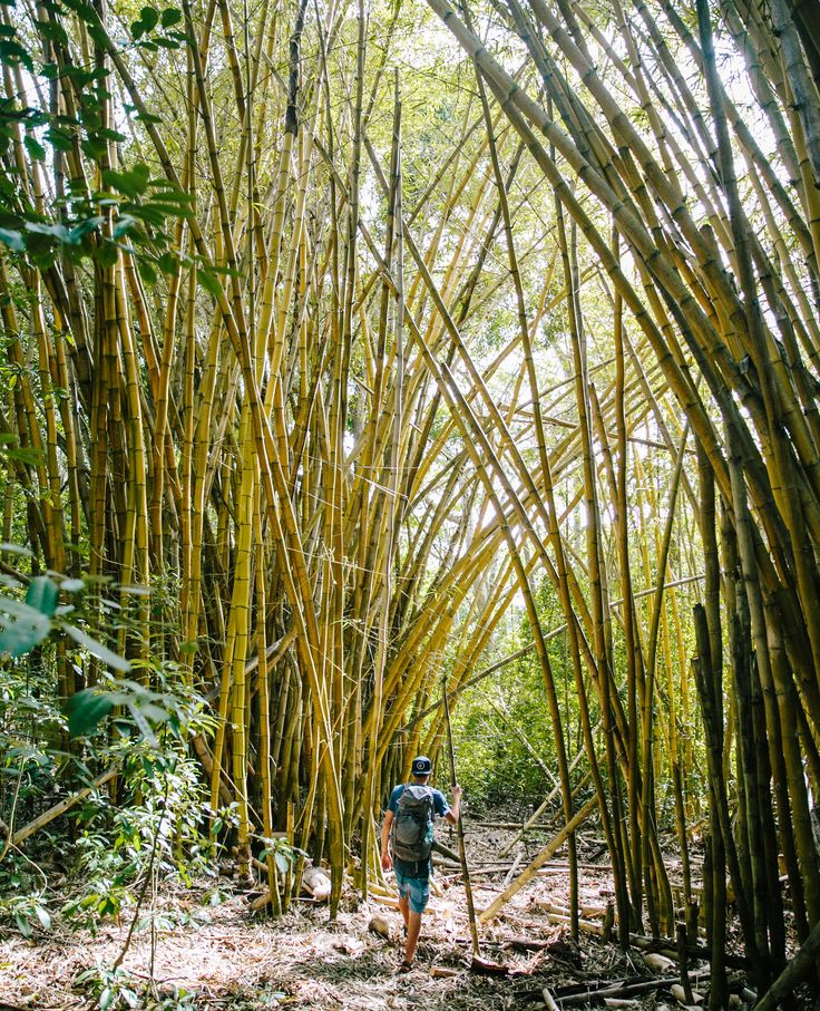 Bamboo Forest in Kauai | Travel Guide to Kauai, Hawaii | Travel Tips for Kauai | Packing List for Kauai | Helpful Tips for Traveling to Kauai | Kauai Travel Guide | Hawaii Travel Guide | Why You Should Visit Hawaii | Napali Coast Boat Excursion | Activities To Do in Kauai | Best Vacation Places in the World via @elanaloo + elanaloo.com