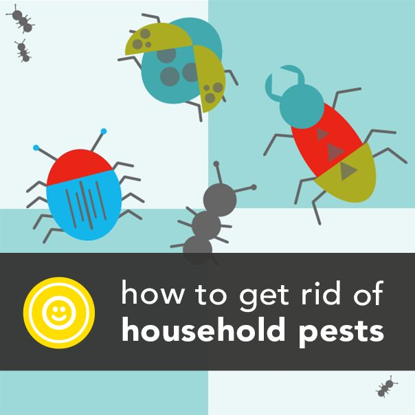 Plagued by household pests? Don't reach for toxic repellants just yet. http://greatist.com/happiness/get-rid-of-16-common-household-pests