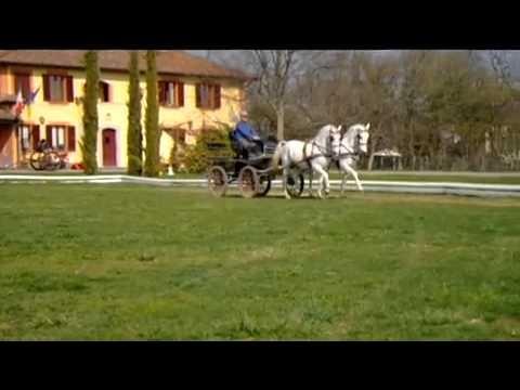 "nomi dei cavalli: ""Favory Telesia"" & ""Napolitano Desireè"""