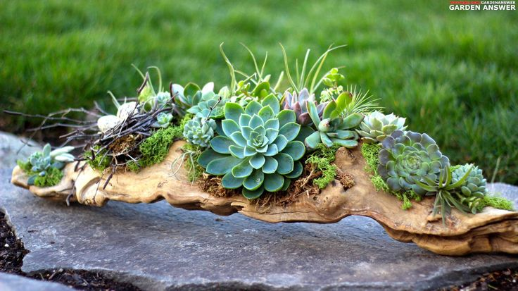#Succulent driftwood arrangement by Laura LeBoutillier http://www.roanokemyhomesweethome.com/                                                                                                                                                     More