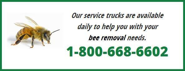 Bee Removal Vero Beach Florida | Bee Removal Boca Raton Florida,Bee Removal Miami Florida,Bee Removal Vero Beach Florida,Bee Removal Stuart Florida,Bee Removal Palm Beach Florida,Bee Removal Ft. Lauderdale Florida
