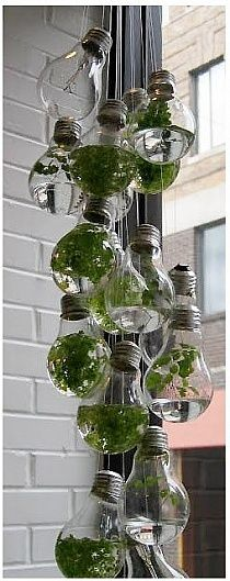 Growing plants inside burnt out light bulbs! unscrew, add some water and an semi-aquatic plant, string them up and you have a hanging plant!