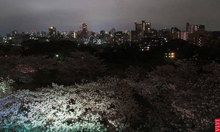 Zicht op Fukuoka tijdens de bloei van de kersenbloesem (Sakura). Japan, 2015. De sakura staat in Japan symbool voor vergankelijke schoonheid. Het leven wordt beschouwd als mooi en kort, een beetje zoals kersenbloesem.