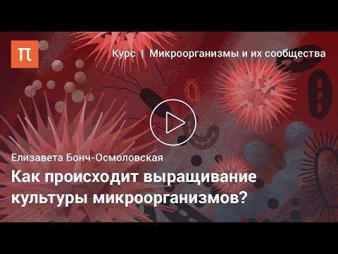 Микроорганизмы и их сообщества — ПостНаука