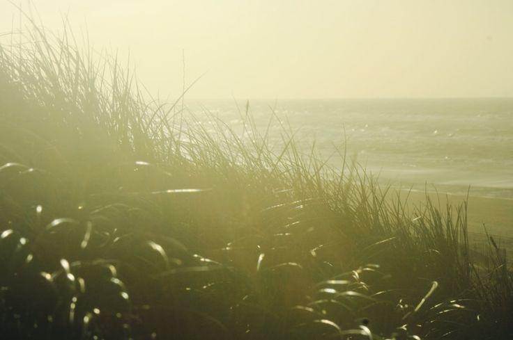 Life's a Beach! — What's Stirring