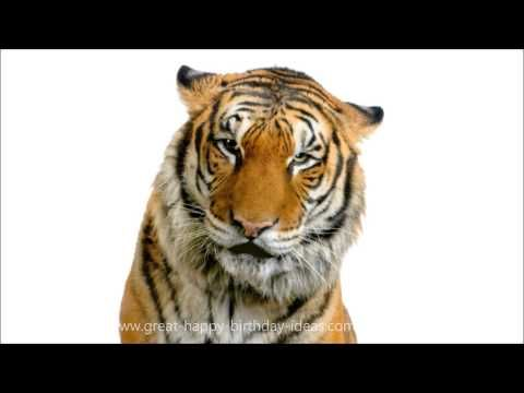 Happy Birthday Tiger Song - YouTube