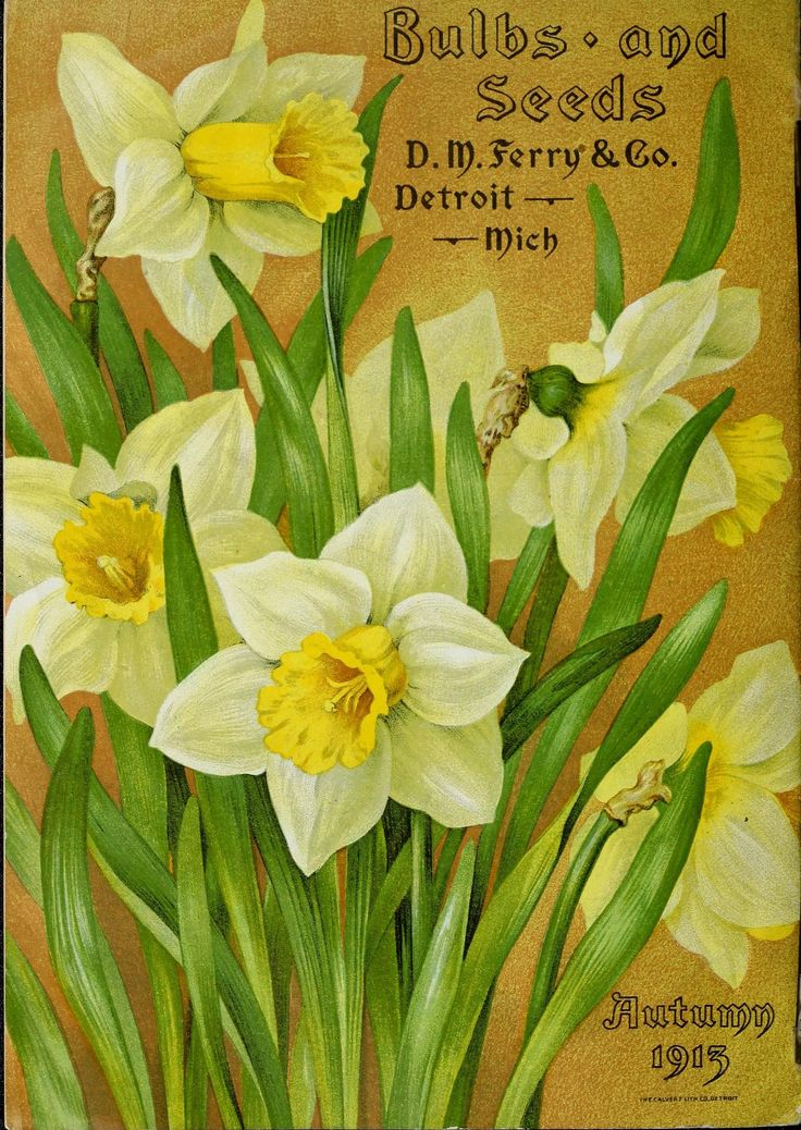 n29_w1150 | Bulbs and seeds :. Detroit, Mich. :D.M. Ferry & … | Flickr - Photo Sharing!