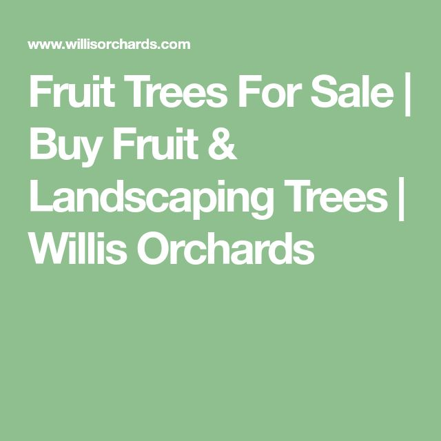 Fruit Trees For Sale | Buy Fruit & Landscaping Trees | Willis Orchards