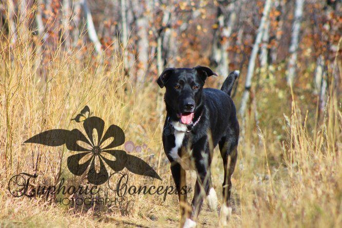 Pet and Rescue Photographer Kingston Ont   https://www.facebook.com/EuphoricConcepts