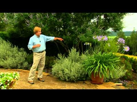 Color Harmony In The Garden: P. Allen Smithu0027s Hands On Gardening Classics