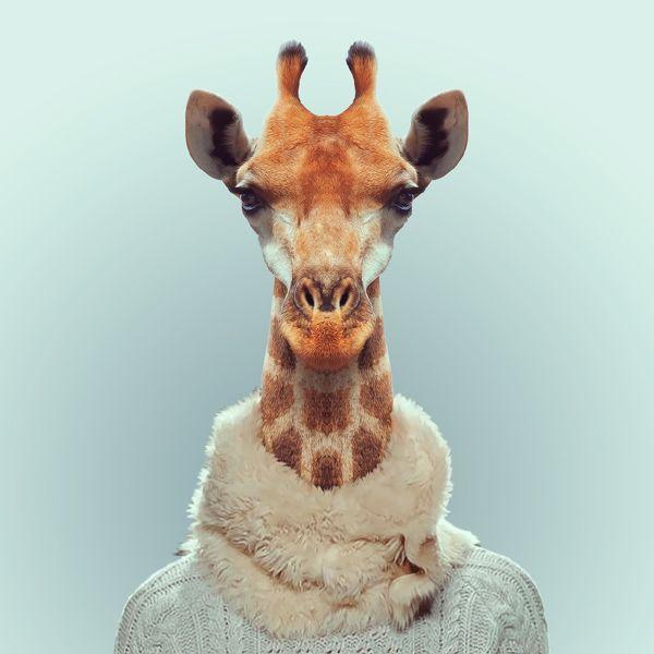 Yago Partal s'amuse à fabriquer des portraits d'animaux habillés de vêtements qui leur correspondent sur le site Zoo Portraits.
