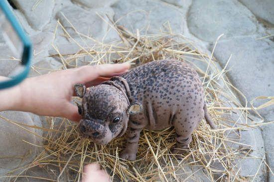 pygmy hippopotamus By Tsybina Natali - Bear Pile