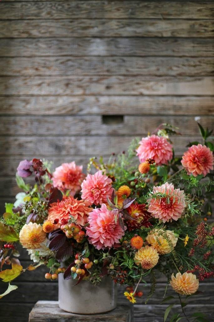 Gardening Autumn - Flower Friday - With the arrival of rains and falling temperatures autumn is a perfect opportunity to make new plantations