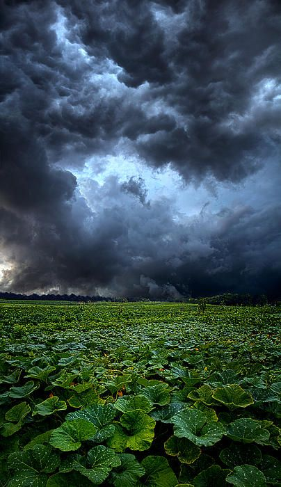 """""""Reclusive"""" Horizons by Phil Koch"""