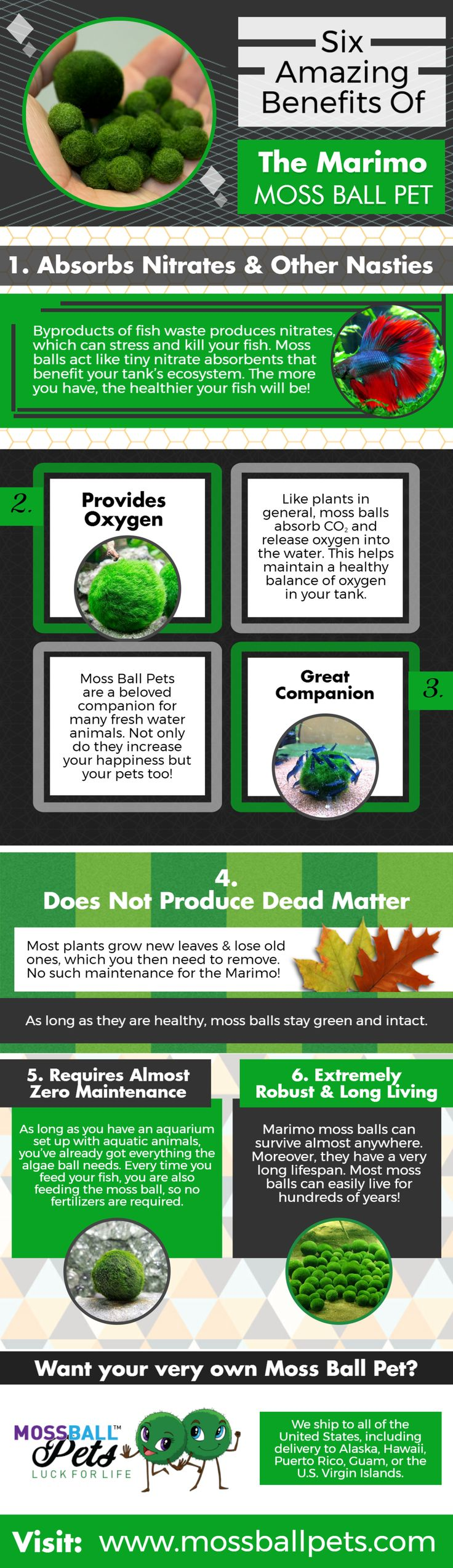 Six Amazing Benefits Of The Marimo Moss Ball Pet for more visit: https://mossballpets.com
