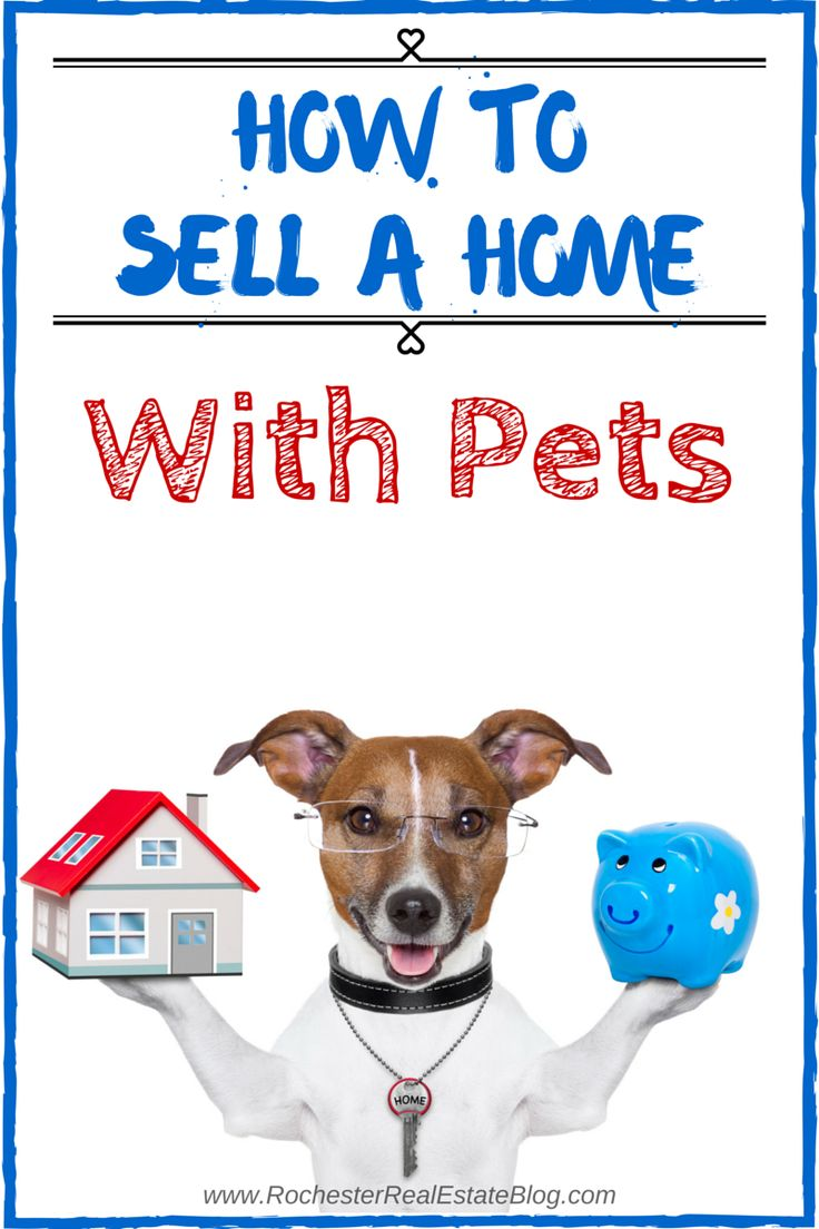 How To Sell A Home With Pets: http://www.rochesterrealestateblog.com/how-to-sell-a-home-with-pets/