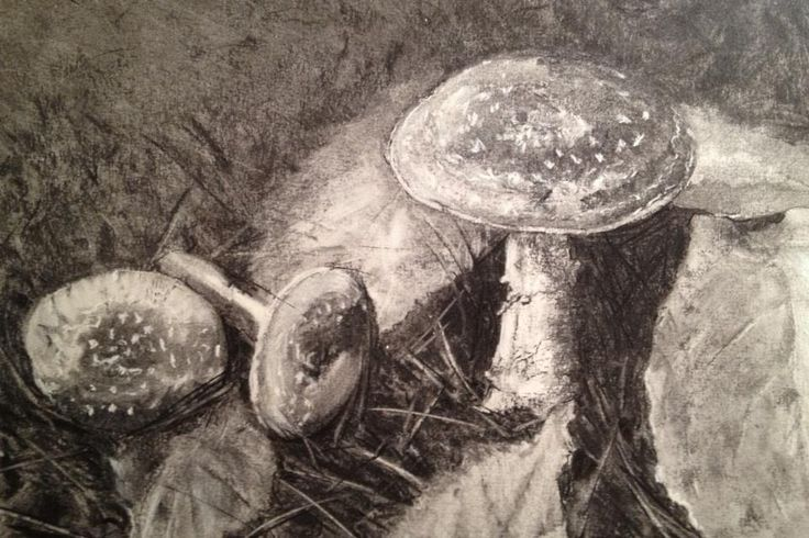 Redhill Toadstools Charcoal, 2016