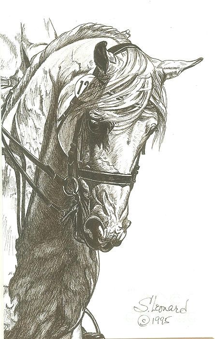 Dressage Horse by Suzanne Leonard http://fineartamerica.com/featured/dressage-horse-suzanne-leonard.html