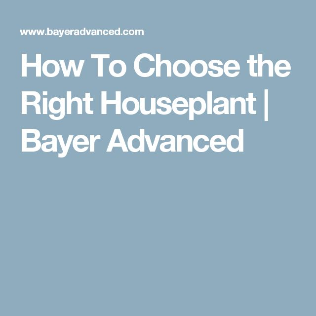 How To Choose the Right Houseplant | Bayer Advanced