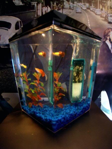 Really Cool Fish Tanks | 100 0091 - 45 Gallon Cichlid Tank, 10 Gallon Community, and 1 Gallon ...