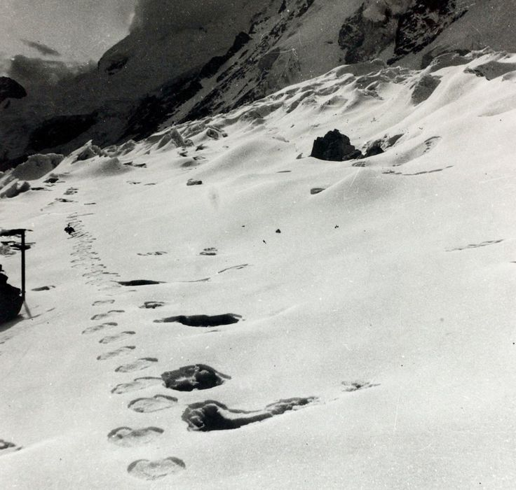 Abominable snowman DNA has revealed the source of possible yeti sightings in Asia.