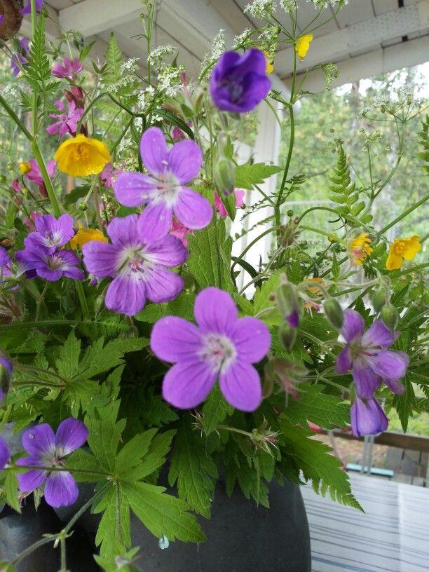 Juhannus kukkia