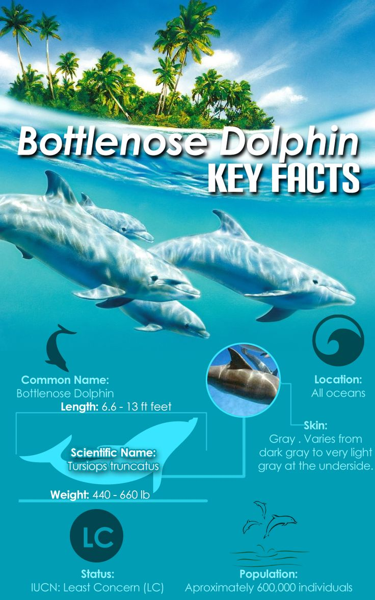Bottle nose Dolphins don't live in all oceans, only tropical warm oceans.