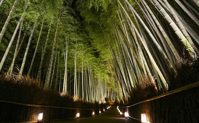 多くの人々の心を癒やした京都の紅葉も見頃を終えつつあり、古都は冬支度を整え始めました。そんな京都の嵯峨・嵐山で12月8日より開催されるのが、嵐山花灯路(はなとうろ)。今回の無料メルマガ『おもしろい京都案内』では著者の英学 … 続きを読む: 京都の冬を愉しめてこそ大人。夜の古都が光に浮かぶ嵐山花灯路へ