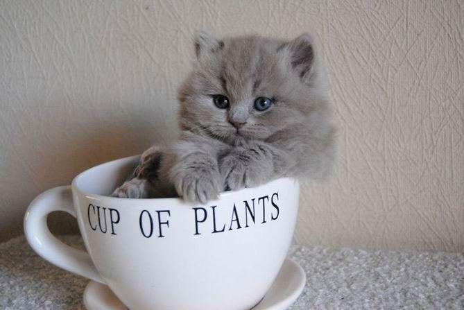 13. 3 chats telement mignons au fond de leurs bols