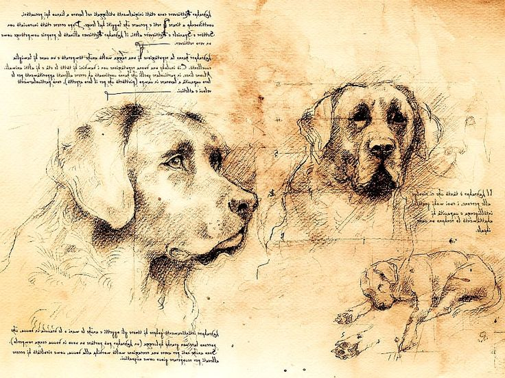 154. Jennifer Miller: Leonardo's Dogs creates unique, beautiful images of dogs, cats and horses in the style of Leonardo Da Vinci. We offer limited edition prints framed and unframed, and we can also offer custom images of your own beloved pets. www.leonardosdogs.com
