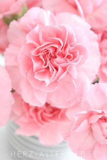 Carnations, I love them the way the smell! Love all colors of them.