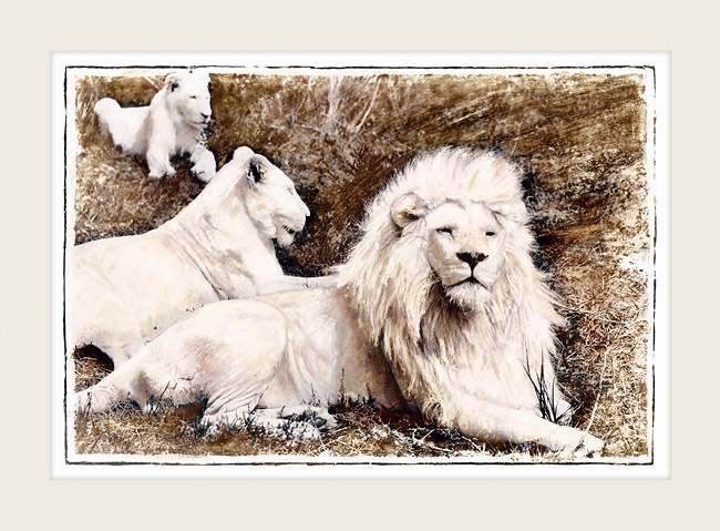 "African Wildlife - WHITE LIONS - ""The Pride"" - Marlene Neumann Fine Art Photography  www.marleneneumann.com  neumann@worldonline.co.za"