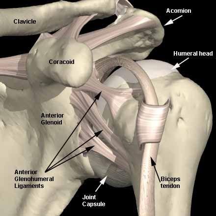 shoulder ligaments