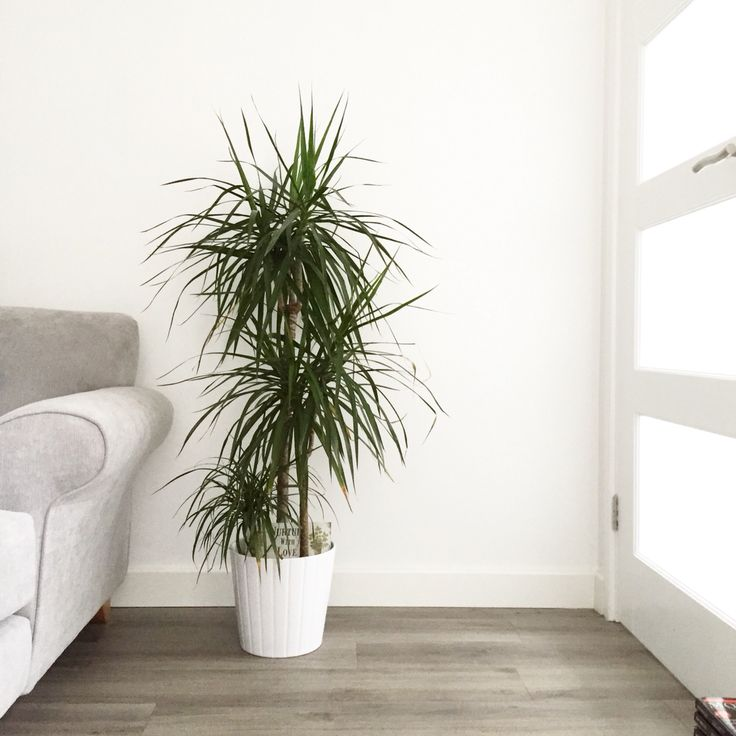 House Plant in a bright and minimal living room.