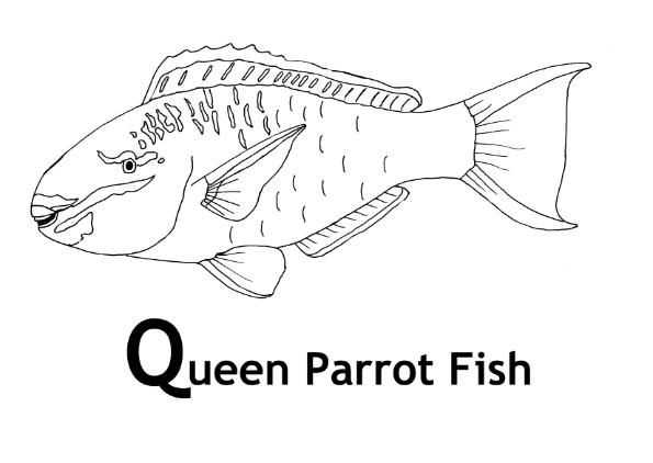 Coral Reef Queen Parrot Fish Coloring Page And