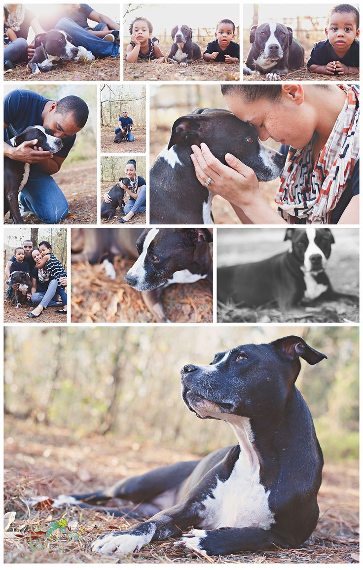 Always have your pets in your family photos if you can. You never know when it's time to say goodbye. Micah Hewett Images