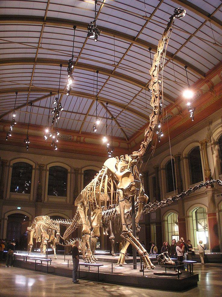 The Dinosaur Hall at the Museum für Naturkunde: Brachiosaurus brancai