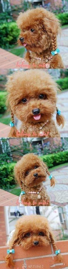 cachorros-com-trancas (11)