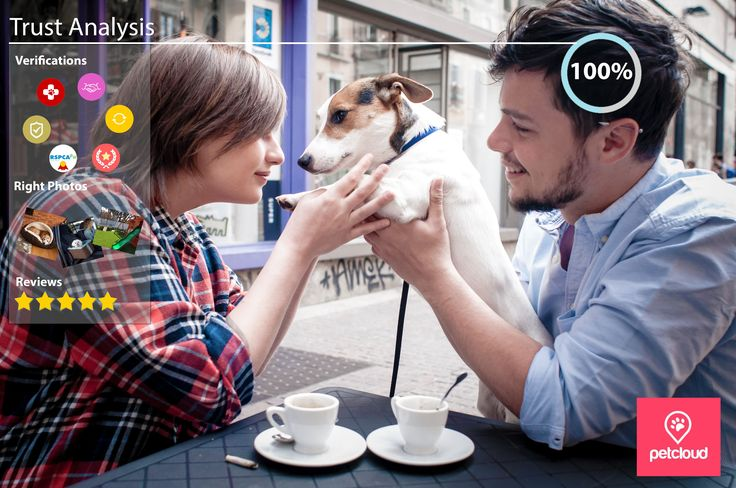 trusted pet sitters, loving pet sitter, verification badges, RSPCA QLD accredited pet sitter, police background check, reliable, responsive, PetCloud Preferred Sitter,